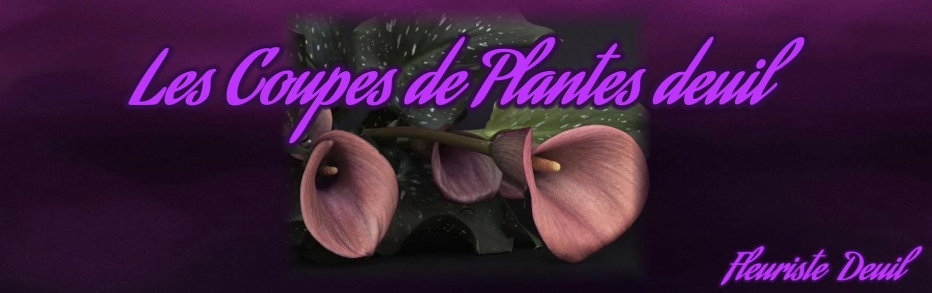 LES COUPES DE PLANTES